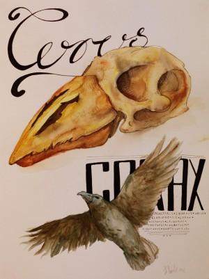 corvus_corax
